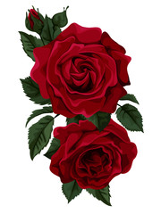 Beautiful bouquet of roses isolated on white.
