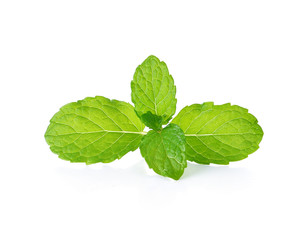 mint leaves isolate on white background