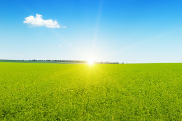 field, sunrise and blue sky