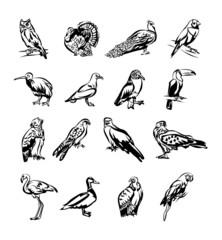 Birds vector black doodle icon set
