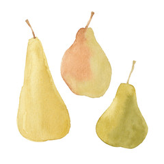 Pears isolated on white background.Vector set, watercolor hand d