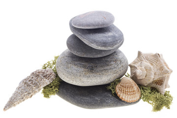sea shells on the stones tower