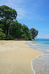 Beach in Costa Rica with lush tropical forest