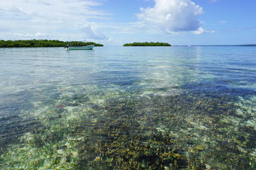 Calm water with coral reef below sea surface