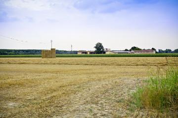 Wall Mural - Farmland and wheat field