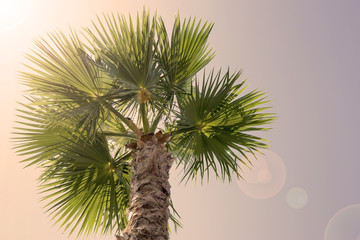 palm tree on a background of clear sky