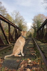 dog is waiting on a train3