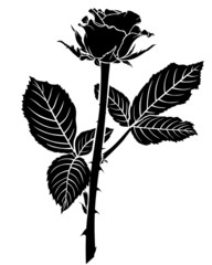 Silhouette of roses bud with two large leaves