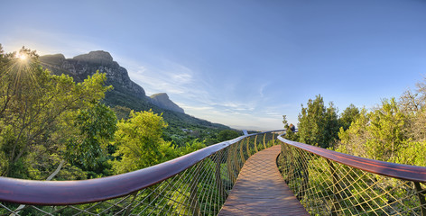 Foto op Canvas Zuid Afrika Kirstenbosch National Botanical Garden in Cape Town South Africa