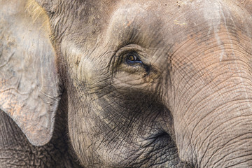 Close up view of elephant face