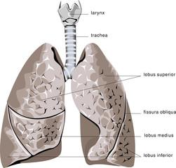 Human organ #14