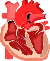 Human organ #11