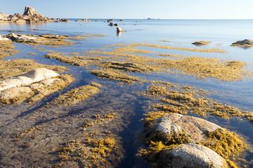 Spiaggia con alghe in Sardegna