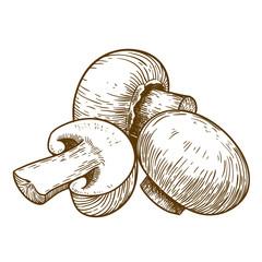 engraving illustration of tree mushrooms champignons