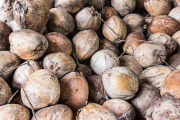 Group of dry coconut .