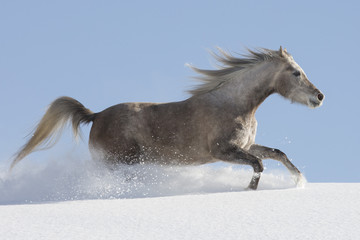 Araber im Schnee
