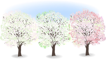 three spring blossoming trees on light background