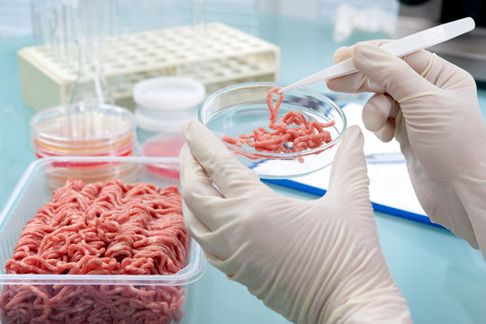 Food quality control expert inspecting at meat specimen