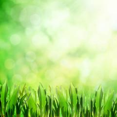 Morning grass field