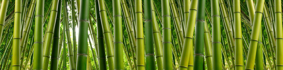 Foto op Canvas Bamboo Dense Bamboo Jungle