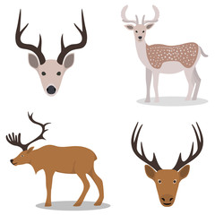Deer and their head