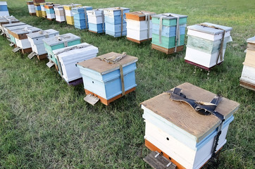 Bee hives in the apiary in the field