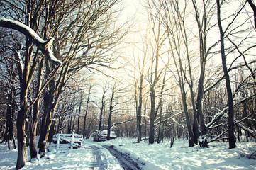 Winter conceptual image.