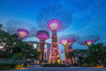 Foto op Aluminium Singapore Night view of The Supertree Grove at Gardens by the Bay in Sing