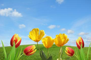 Fototapete - Frühlings-Hintergrund mit Tulpen