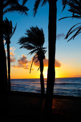 Sunset and palms
