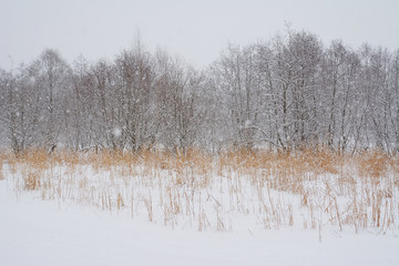 Blizzard winter landscape