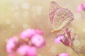 Dreamy photo of a beautiful butterfly
