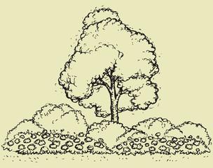 Tree over flowerbed. Vector sketch