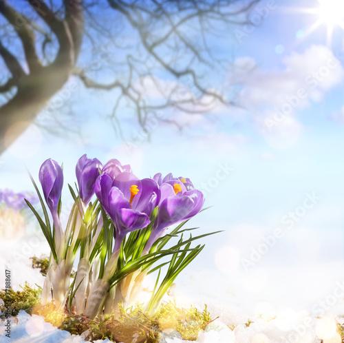 Art Spring Flowers Stockfotos Und Lizenzfreie Bilder Auf Fotolia