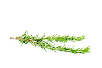 Branch of rosemary isolated on white