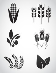 Plantation vector icon set.