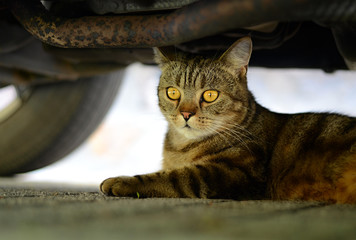The cat under the car - with a twinkle in his eyes