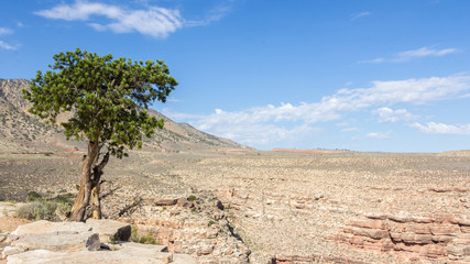 Lonely tree against blue sky at the edge of a canyon in Arizona,