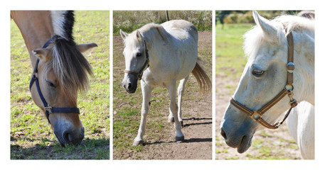 Set of three pictures of horses, Panska Licha, Brno, Czech