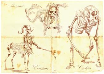 An hand drawn vector: Mermaid, Cyclops, Centaur