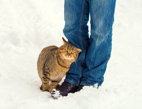 Cat rubbing against male legs on the snow