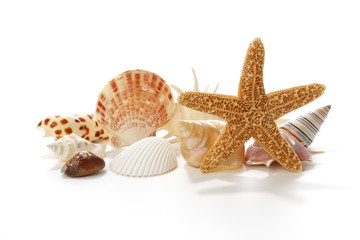 Seashells and starfish on white background