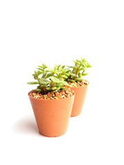 collection of little houseplant in a pot over white background