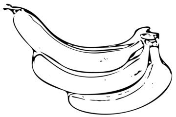 Bananas Illustration