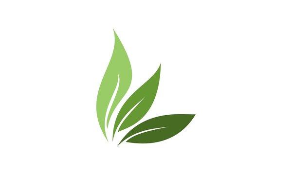 Leaf Logo 17