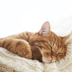 Wall Mural - Cat sleeping
