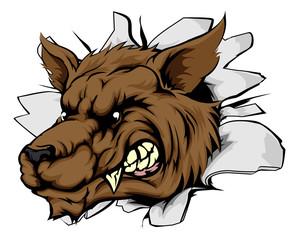 Wolf sports mascot breakthrough