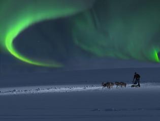 Hundeschlitten mit Nordlicht