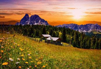 flower meadow in the Alps at sunset