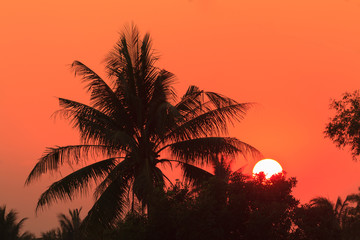 Sunset behind coconut and bamboo tree